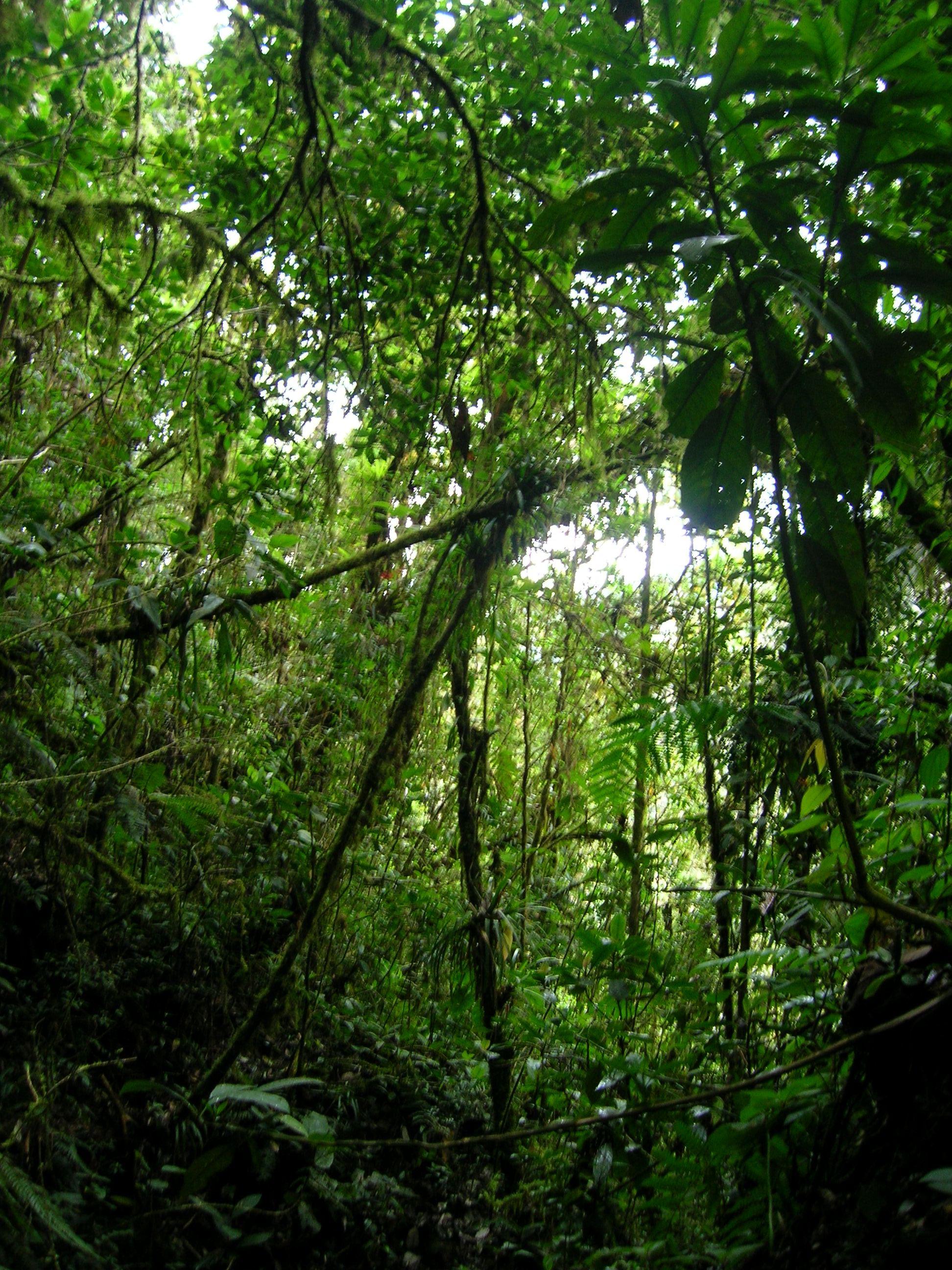 typique bosque nublado, hermoso otra vez...